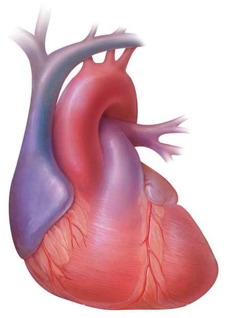 Tratamiento de la insuficiencia cardiaca: Un chip para controlarla