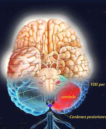 ¿Cuáles son las causas del Parkinson?