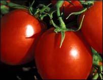 Comer Tomates