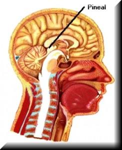 Las funciones de la glándula pineal