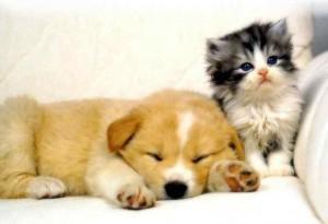 Los beneficios de las mascotas para la salud