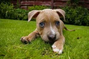 Los perros hipoalergénicos: ¿Mito o realidad?