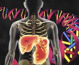 Los síntomas de la enfermedad de Gaucher