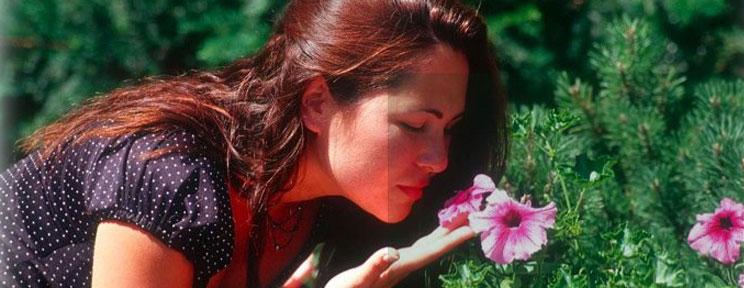 El tratamiento de la anosmia