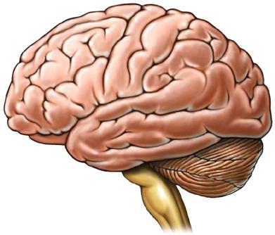 Protección del cerebro: Apagarse cuando no hay energía
