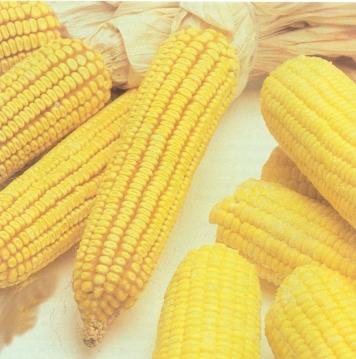 El maíz dulce en la dieta