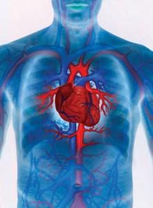 Las causas de las enfermedades cardiovasculares más comunes