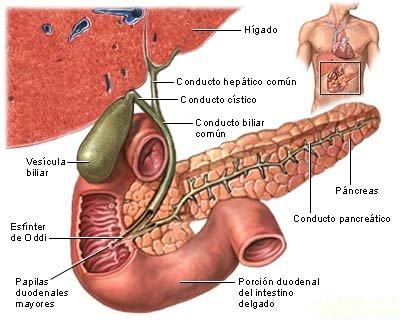 Las fases abstinentnogo del síndrome