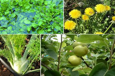 Hierbas medicinales para combatir las infecciones del for Hierbas y plantas medicinales