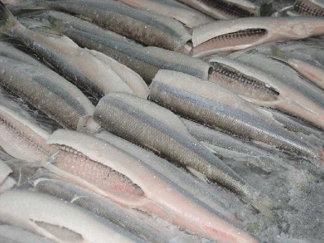 Seguridad alimenticia: Riesgos del pescado congelado