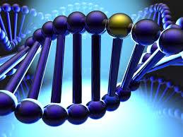 Descubiertos nuevos genes de la obesidad