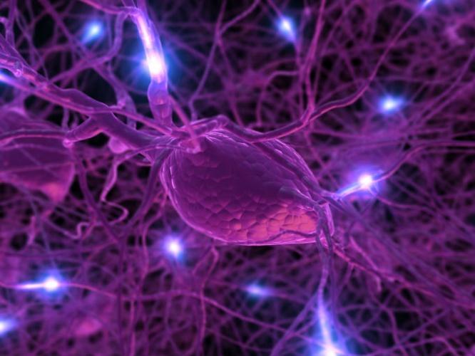 La dopamina: Dos funciones muy curiosas de esta hormona