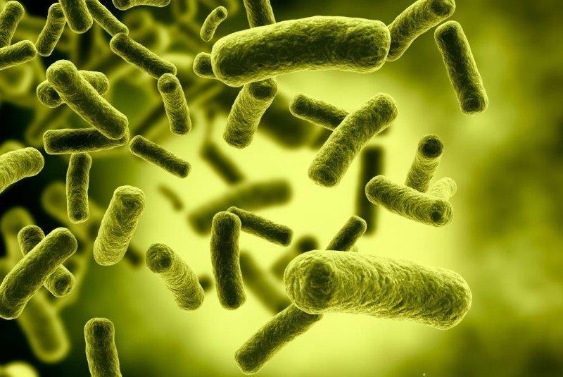 Las 5 bacterias más usuales en los alimentos