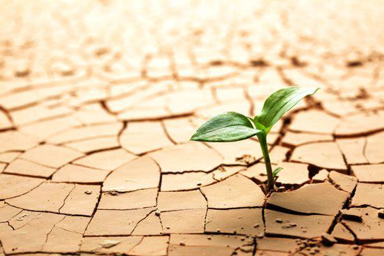 ¿Cómo fomentar la resiliencia?