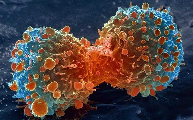 El estilo de vida en la aparición del cáncer