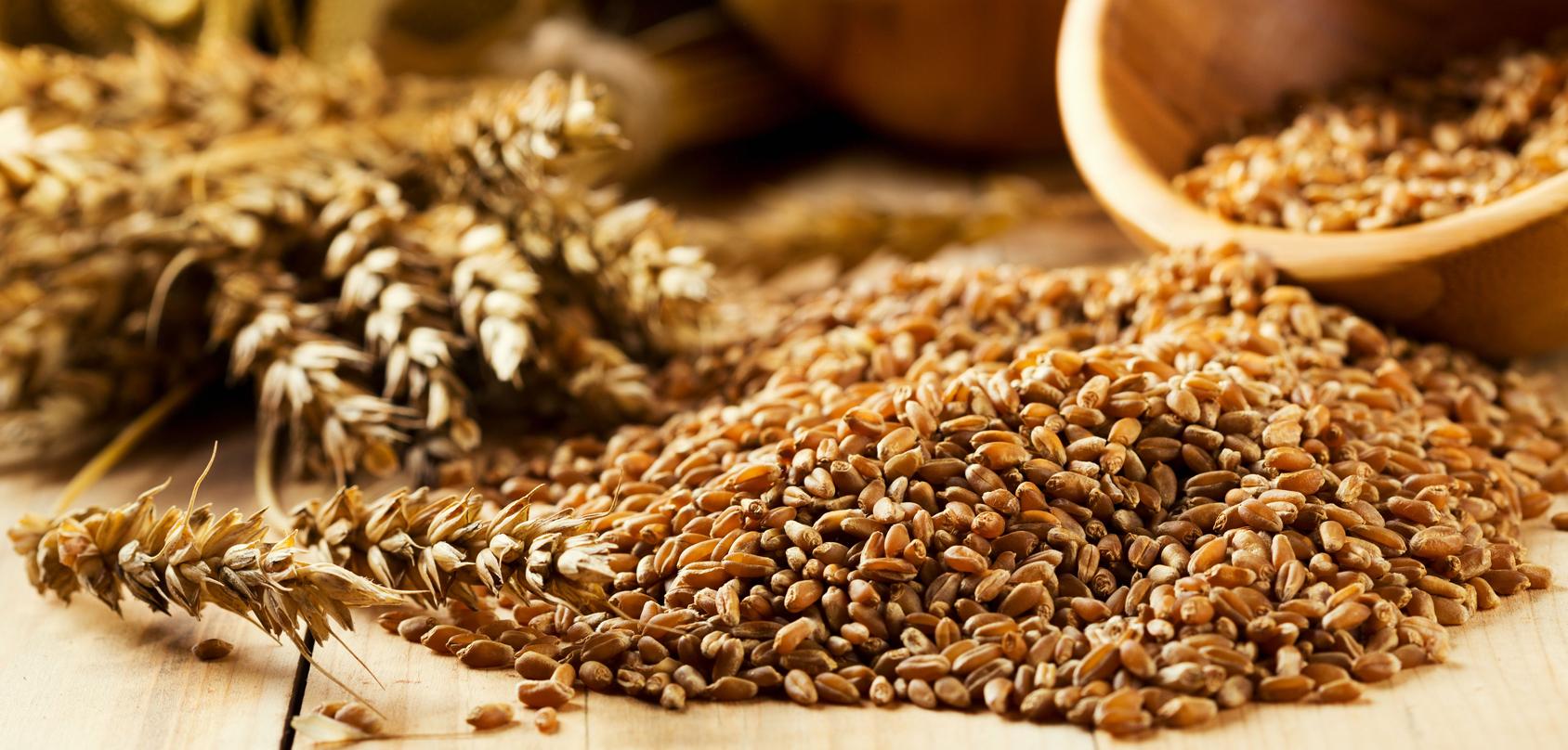 Los granos en la dieta: ¿Son buenos o malos?