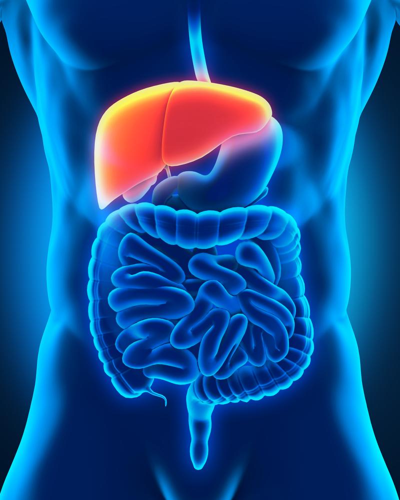 ¿Cómo tener un hígado saludable?